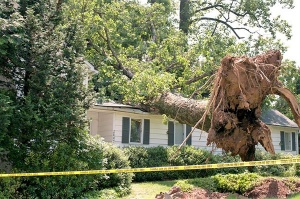 Storm Damage Insurance Restoration